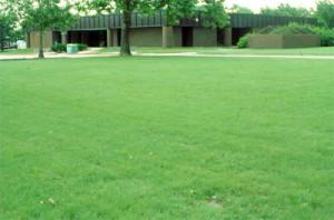 Buffalograss Lawn